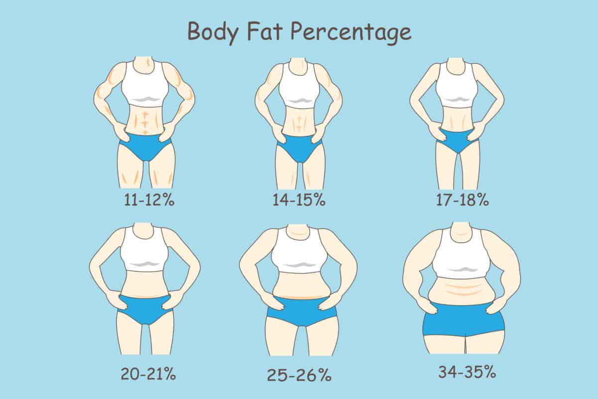 What percent of body fat is obese
